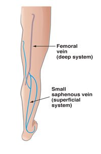 Back of leg vein anatomy