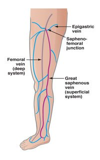 Front-of-leg-vein-anatomy.